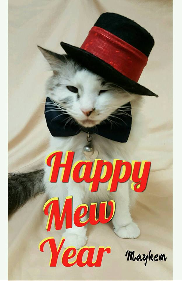 cat in a new years top hat