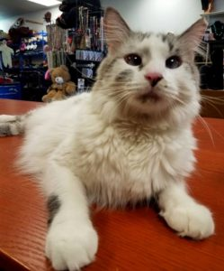 Mayhem the Cat welcomes AZ Kidz n More customers