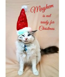 Mayhem the Cat in his Santa hat.