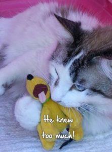 Mayhem the cat with dog toy.