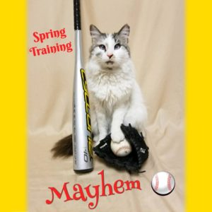 Mayhem the Cat with a bat and ball.