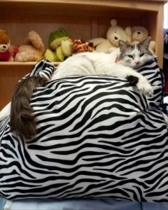 Cat on a huge beanbag chair